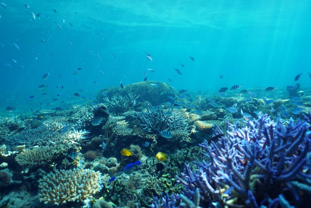 【恩納村】こんなサンゴの群生見たことない!? 水深40mに広がるレアサンゴ【ベントスダイバーズ】