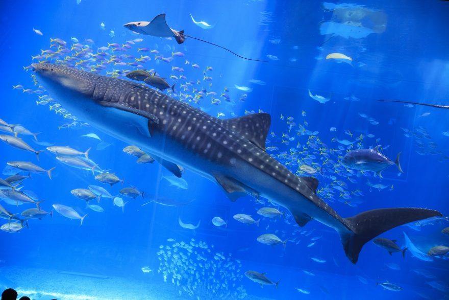 相次ぐサメの出没。専門家とサメの素顔に迫るPart2 -絶滅の危機からサメを救おう-