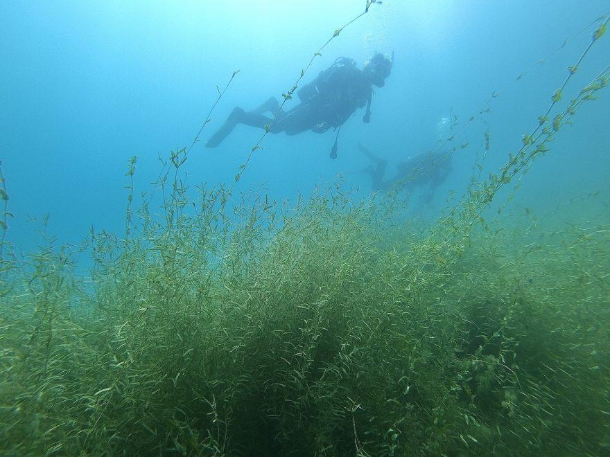 ダイバーを入れて。繁茂する水草の量もおわかりいただけるだろうか。