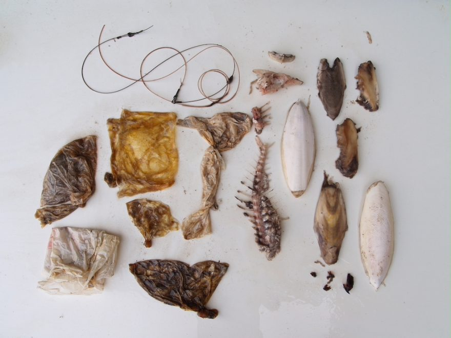 サメの胃から見つかったゴミ 国営沖縄記念公園(海洋博公園)沖縄美ら海水族館