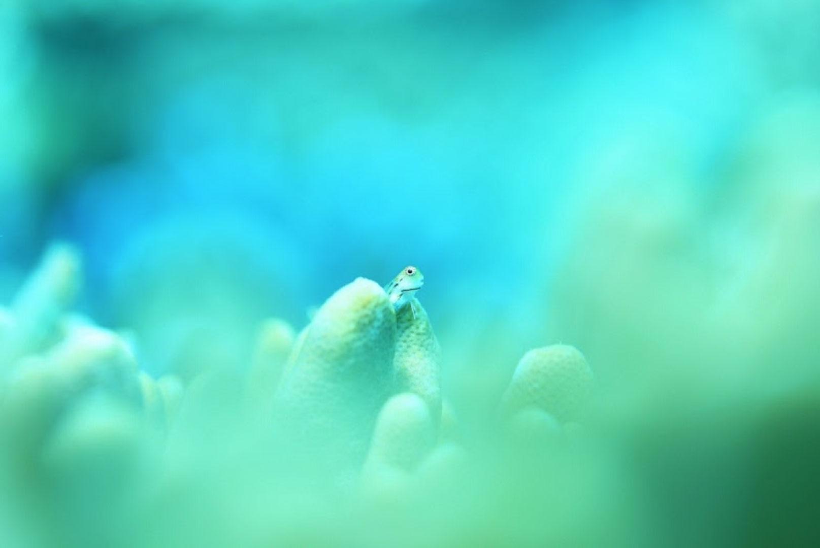 オーシャンスタジオ@石垣島主催!阿部秀樹の絶対上手くなるカメラセミナー