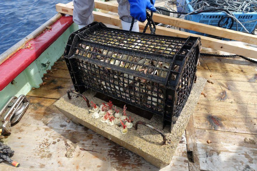 ハゼが隠れていた漁礁 写真提供:古井戸樹(黒潮生物研究所)