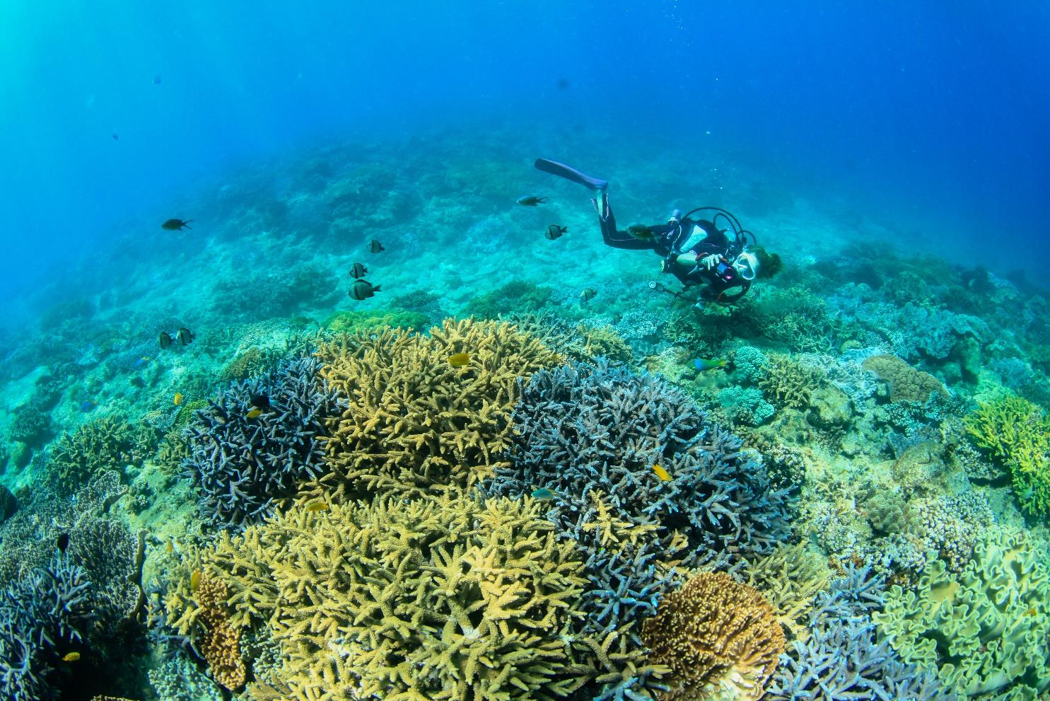 【ランキング】2021年9月に人気だった海やダイビングのニュース・コラム・おもしろ記事