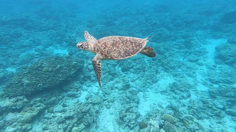サウナのあとの水風呂は、目の前の美しい海へそのままダイブ。運が良ければウミガメにも会えちゃうかも。