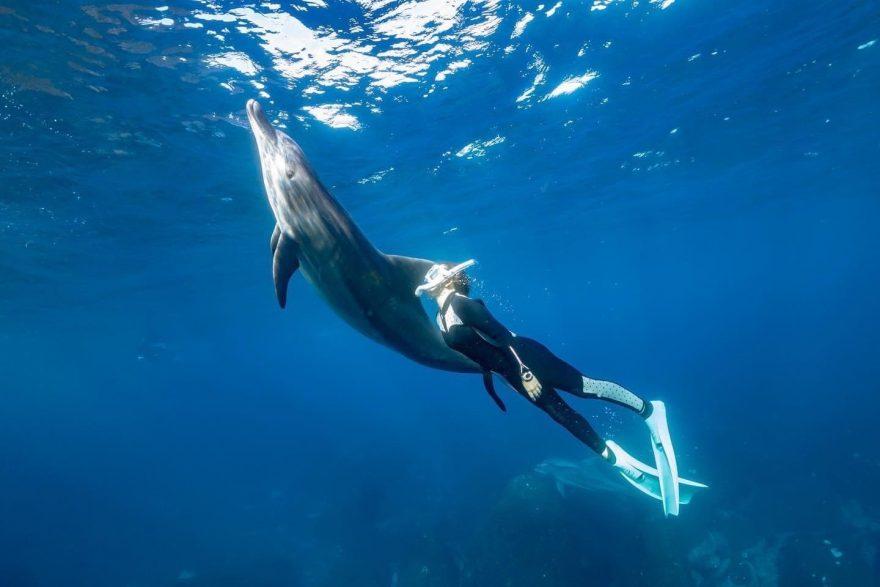 トゥルーノース・中川さん直伝、ドルフィンスイムのコツをつかんでイルカと泳ごう!