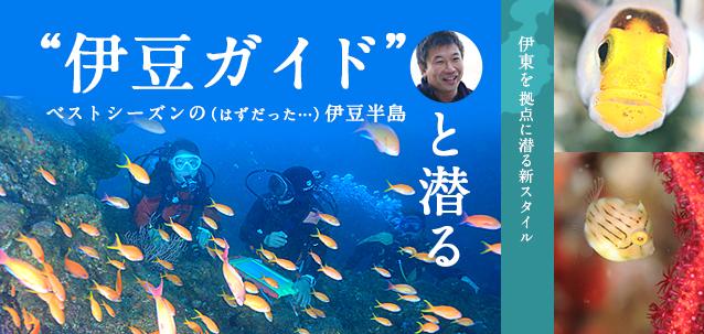 「伊豆ガイド」と潜る ベストシーズンの(はずだった)伊豆半島